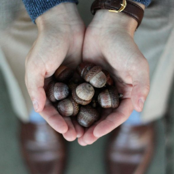 Handful of acorns
